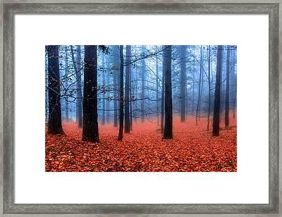 Fog On Leaves Framed Print