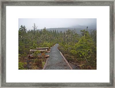 Fog On The Trail Framed Print by Cathy Mahnke