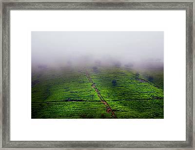 Fog Over Tea Plantations. Sri Lanka Framed Print