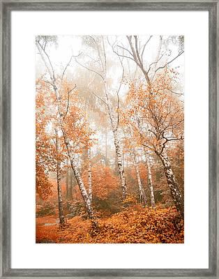 Foggy Autumn Aspens Framed Print