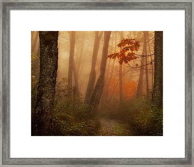 Foggy Autumn Framed Print by Mary Jo Allen
