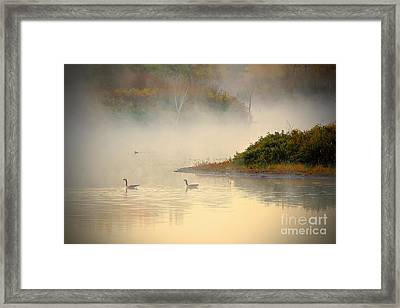 Foggy Autumn Swim Framed Print