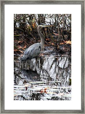 Framed Print featuring the photograph Foggy Bog Heron by Kenny Glotfelty