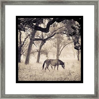 Foggy Field Framed Print