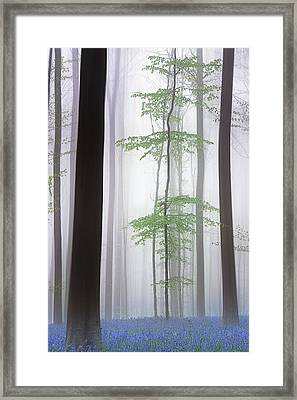 Foggy Forest .... Framed Print