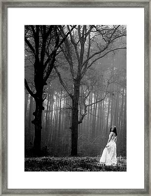 Foggy Forest Framed Print by Ivy  Taylor