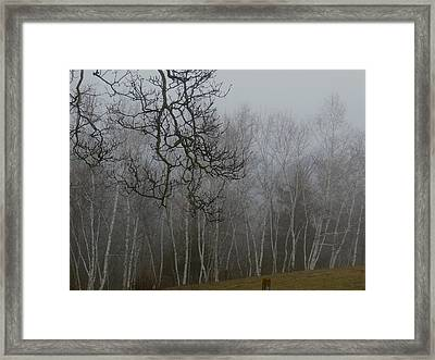 Foggy Forest Framed Print