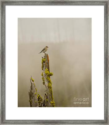 Foggy Friend Framed Print by Birches Photography