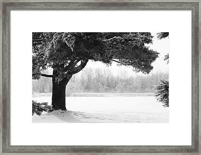 Foggy Icestorm Framed Print by Sophie Vigneault