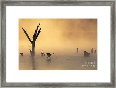 Foggy Landing Framed Print