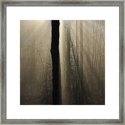 Framed Print featuring the photograph Foggy Mornin' by Paul Noble