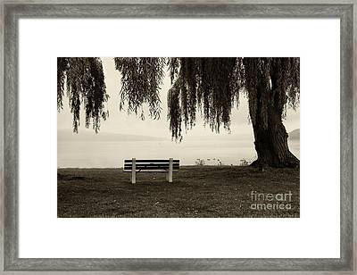 Foggy Morning At Stewart Park Framed Print