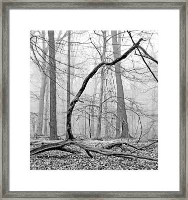 Foggy Morning Deciduous Forest Framed Print