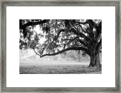 Foggy Morning On Coosaw Plantation Framed Print