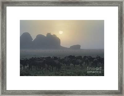Foggy Morning - Serengeti Framed Print by Sandra Bronstein