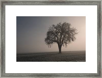 Foggy Morning Sunshine Framed Print