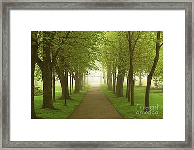 Foggy Spring Park Framed Print by Elena Elisseeva
