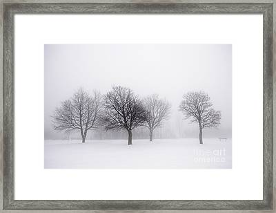 Foggy Park With Winter Trees Framed Print