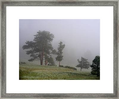 Framed Print featuring the photograph Foggy Pines by Craig T Burgwardt