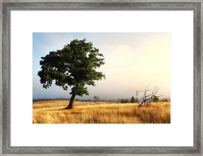 Foggy Summer Morning On Blue Ridge Parkway I Framed Print by Dan Carmichael