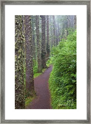 Foggy Trail Framed Print by Mike  Dawson