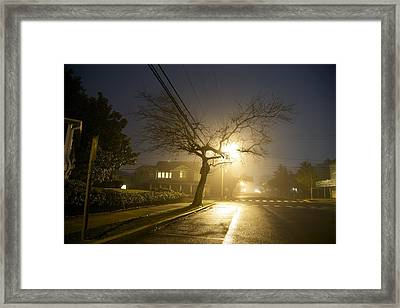 Foggy Tree Framed Print by Beau Finley