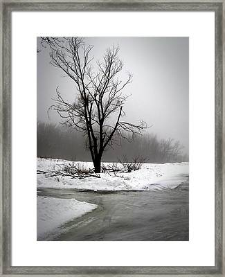 Foggy Tree Framed Print by Kimberly Mackowski