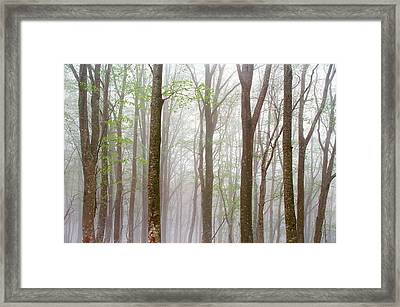 Foggy Trees In Forest Framed Print by Panoramic Images