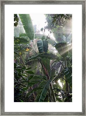Foilage In The Mist Framed Print
