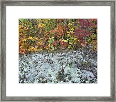 Foliage And Lichen Killarney Provincial Framed Print by Tim Fitzharris