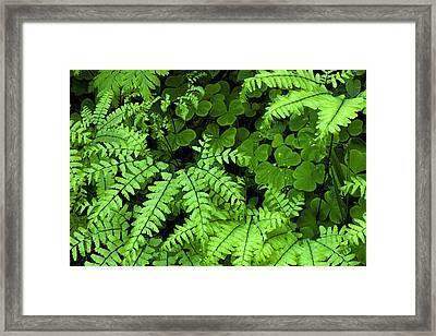 Foliage At Springtime Framed Print