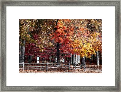 Foliage Colors Framed Print by John Rizzuto