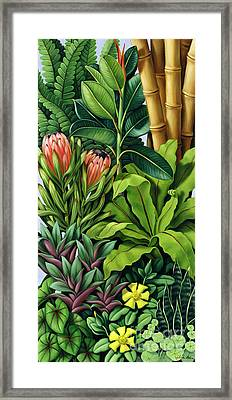 Foliage IIi Framed Print by Catherine Abel