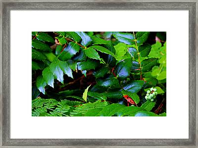 Foliage N Such Framed Print by Jeanette C Landstrom