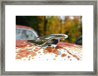 Framed Print featuring the photograph Foliage by Paul Noble
