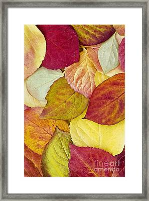 Foliage Quilt Framed Print