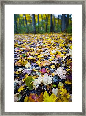 Foliage Framed Print by Sebastian Musial