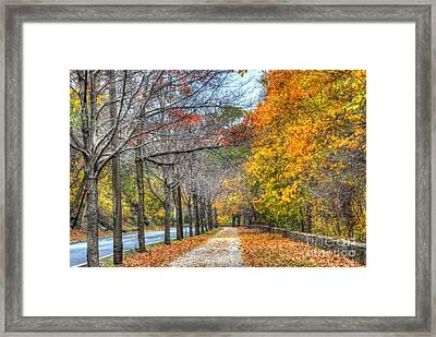 Foliage Trail Framed Print by Mark Ayzenberg