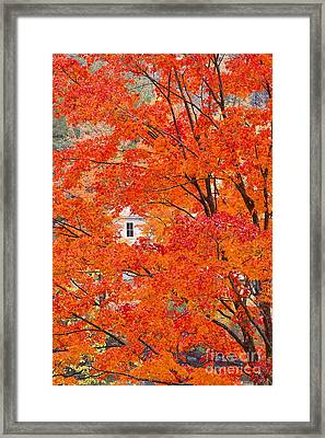 Framed Print featuring the photograph Foliage Window by Alan L Graham