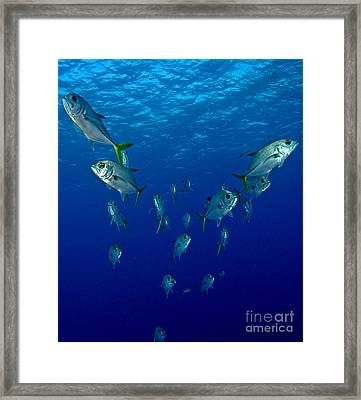 Follow Jack Framed Print
