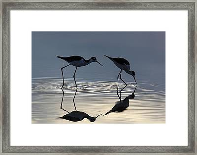 Follow Me Framed Print