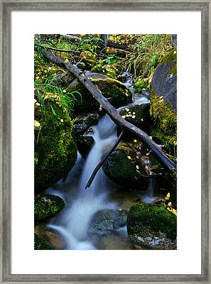 Framed Print featuring the photograph Follow Me by Jeremy Rhoades
