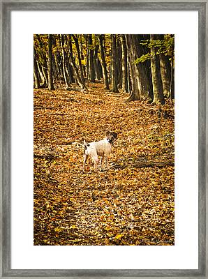 Framed Print featuring the photograph Follow Me by Phil Abrams