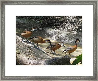 Follow Me Framed Print by Steven Parker