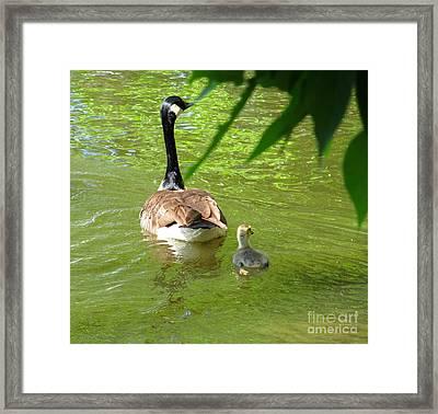 Follow Me Framed Print by Tina M Wenger