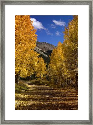 Framed Print featuring the photograph Follow The Gold by Ellen Heaverlo