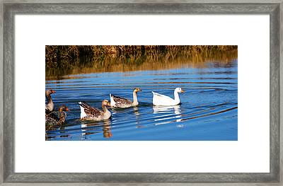 Follow The Leader 2 Framed Print by Linda Segerson