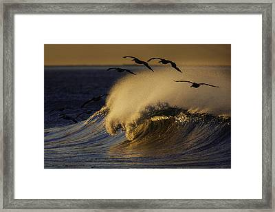 Framed Print featuring the photograph Follow The Leader 73a2324 by David Orias