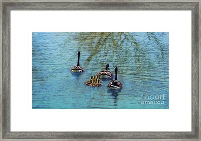 Follow The Leader Baby Framed Print by Peggy Franz