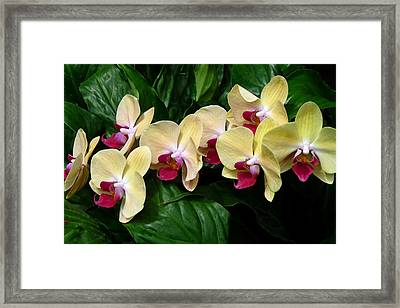 Framed Print featuring the photograph Follow The Leader by Cindy McDaniel